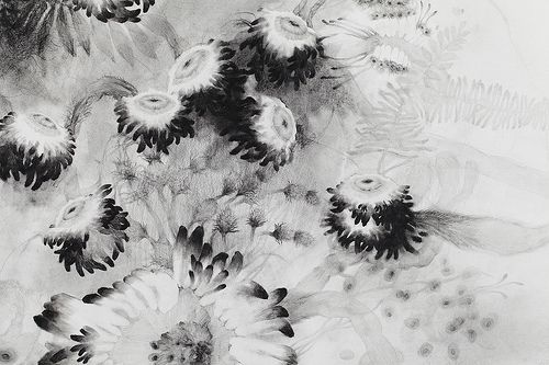 Black Flowers. Pencil, graphite powder on paper. 2013