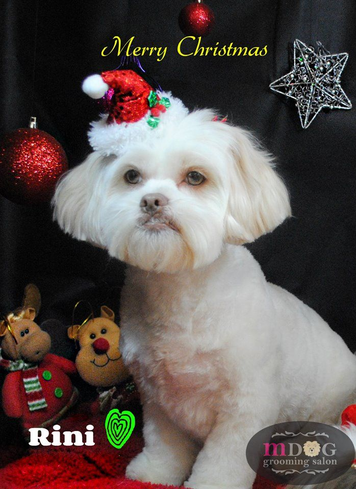 Merry Christmas Rini!