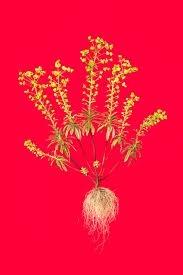 william rugen new botanicals - Google Search