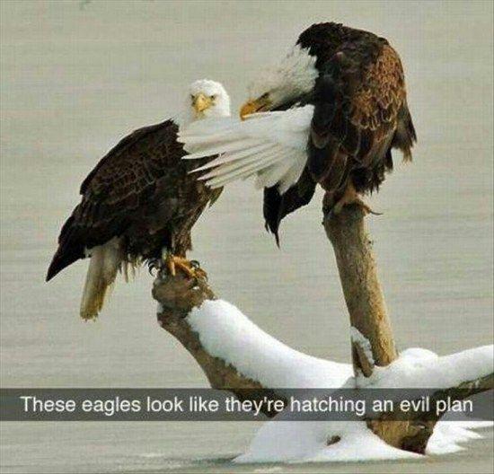eagles evil plan clean funny