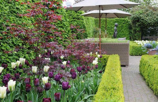 17 Best images about GARDEN Front Yard on Pinterest
