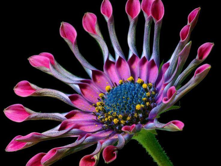 Bilder på skrivbordet - Tropiska blommor: http://wallpapic.se/naturen/tropiska-blommor/wallpaper-10119