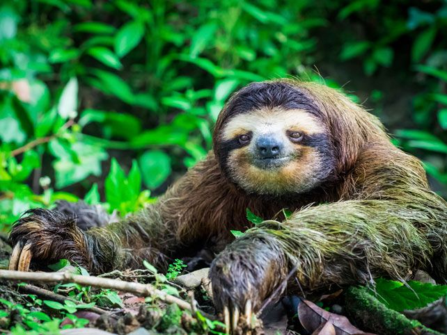 Costa Rica sloths | International Sloth Day | Luxury Costa Rica Travel | Ker Downey