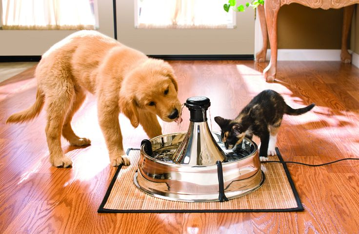 Dogs and cats like drinking fresh running water, and if we can provide them with the best pet water fountains to meet this need, we can keep them hydrated and healthy. Pet doctors recommend using fountains that have a spacious basin, an integrated filtering system and an adjustable flow control.It might give you a hard …