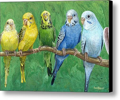 Budgie Band Canvas Print / Canvas Art By Cara Bevan