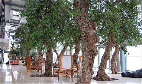 Olive trees in Ian Simpson's apartment