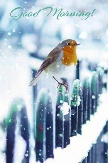 Image result for good morning sunday with snow images