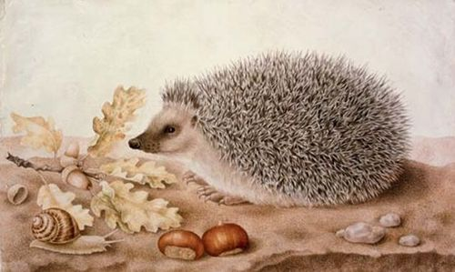 fritzundco:  Giovanna Garzoni (1600–1670) :Still Life with a hedgehog, snail and chestnuts  giovanna garzoni is fast becoming one of my all time favorites. so detailed, so poignant.