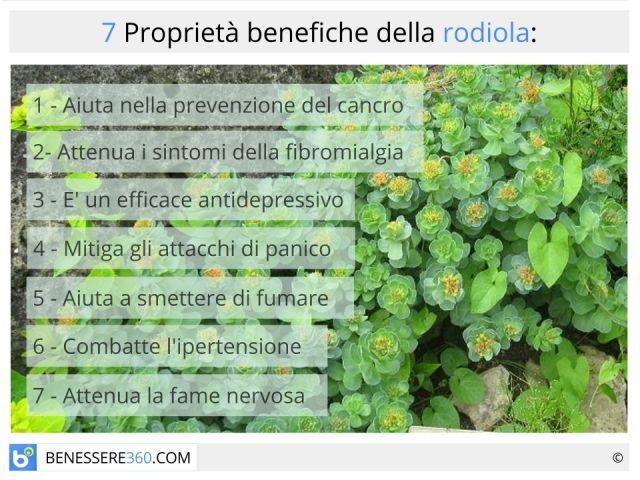Quali sono caratteristiche e proprietà della Rodiola rosea, una piccola pianta dalle grandi virtù? Utile contro lo stress e di conseguenza contro tutte le patologie ad esso legate, essa combina moltissimi effetti benefici a ben poche controindicazioni.