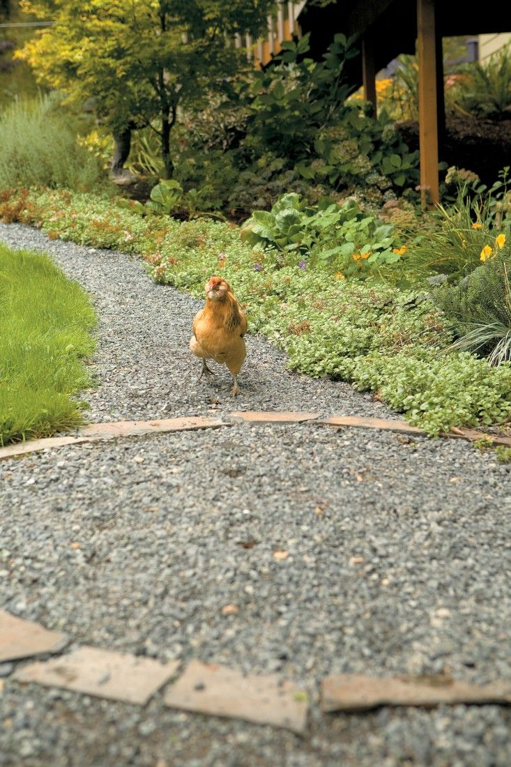 Incorporating chickens into your garden means more than just thinking about plants; it's important to consider the hardscaping too. Gravel paths provide a clean, permeable surface while also providing chickens with a source of grit which they need to digest their food. Photo by Kate Baldwin. (From Free-Range Chicken Gardens by Jessi Bloom)