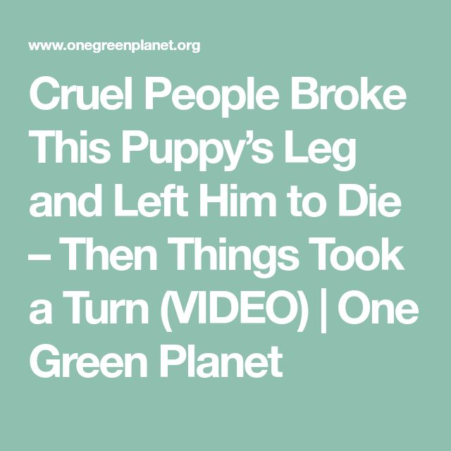 Cruel People Broke This Puppy's Leg and Left Him to Die –Then Things Took a Turn (VIDEO) | One Green Planet