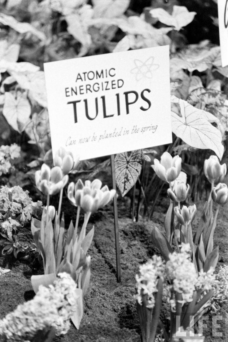 366 best atomic age images on pinterest atomic age backyards