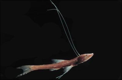 les 82 meilleures images propos de animaux marins sur pinterest prague pr historique et. Black Bedroom Furniture Sets. Home Design Ideas