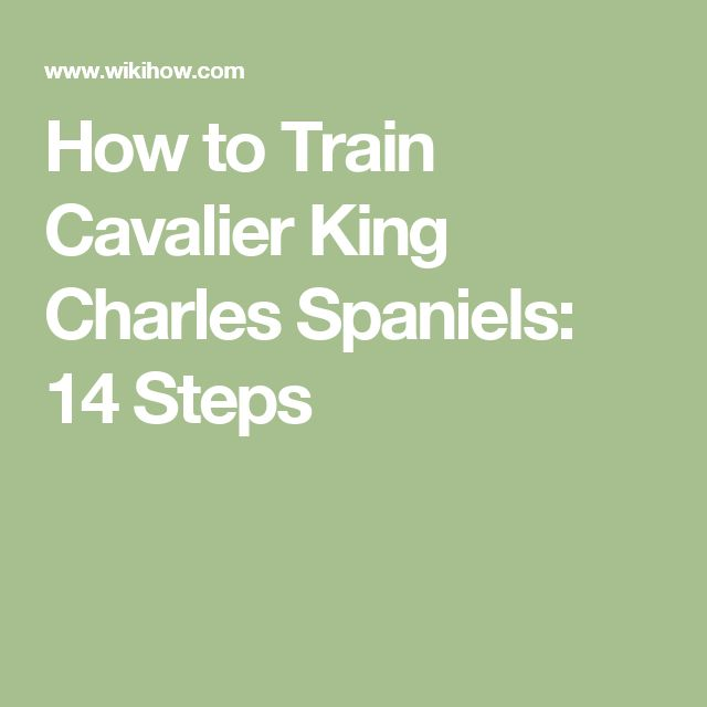 How to Train Cavalier King Charles Spaniels: 14 Steps