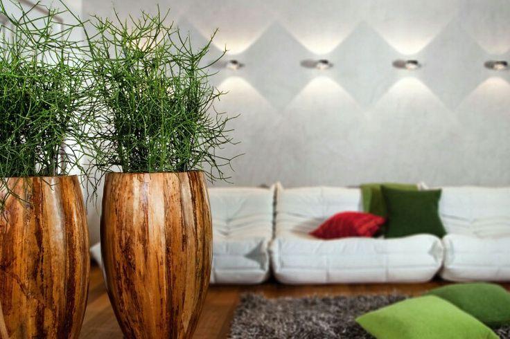Euphorbia tirucali - wilczomlecz ołówkowy