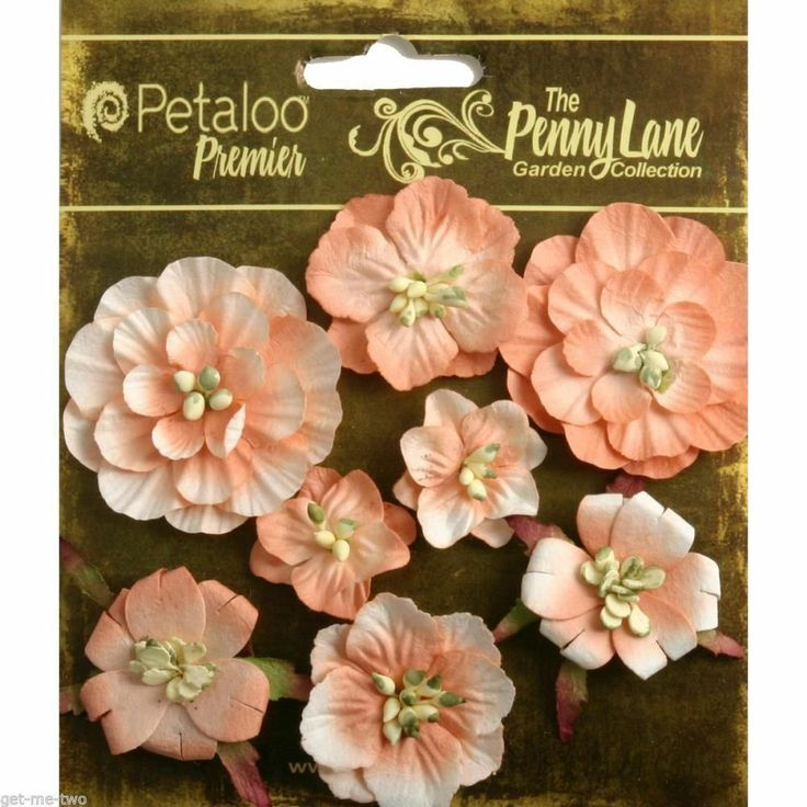 Купить цветы petaloo розы черный принц купить в минске