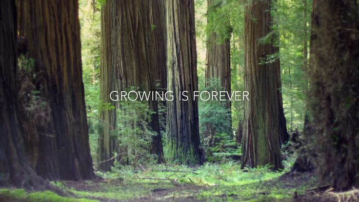 Growing is Forever on Vimeo