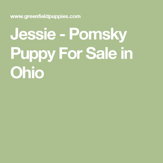 Jessie - Pomsky Puppy For Sale in Ohio