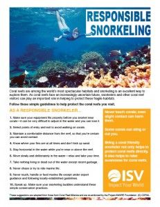 Tips for snorkelling responsibly