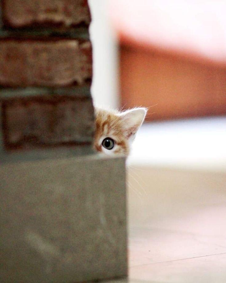 Фото котенок выглядывает
