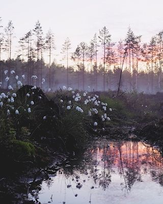 Sandra Linnell - Dancing Fairies. A photo of a pink and purple sunset in a forrest pool of calm water.