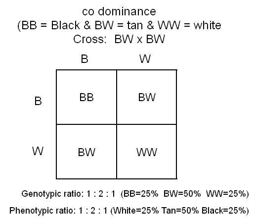 codominance punnett square punnett squares biology pinterest biology and squares. Black Bedroom Furniture Sets. Home Design Ideas