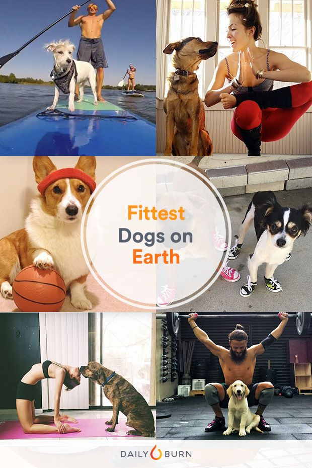 The 37 Fittest Dogs of Instagram – Vital Proteins