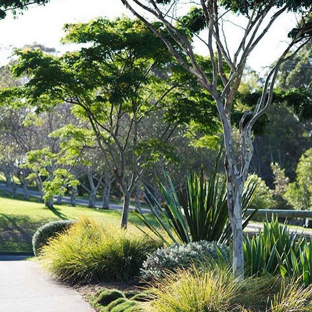 Such a simple landscape but so effective.......by Secret Gardens, Sydney. Bluedale sell Lomandra and Westringa varieties, such as those used here, online. www.bluedaleplantsoline.com.au #landscaping #landscapearchitecture #gardens #grasses #gardening