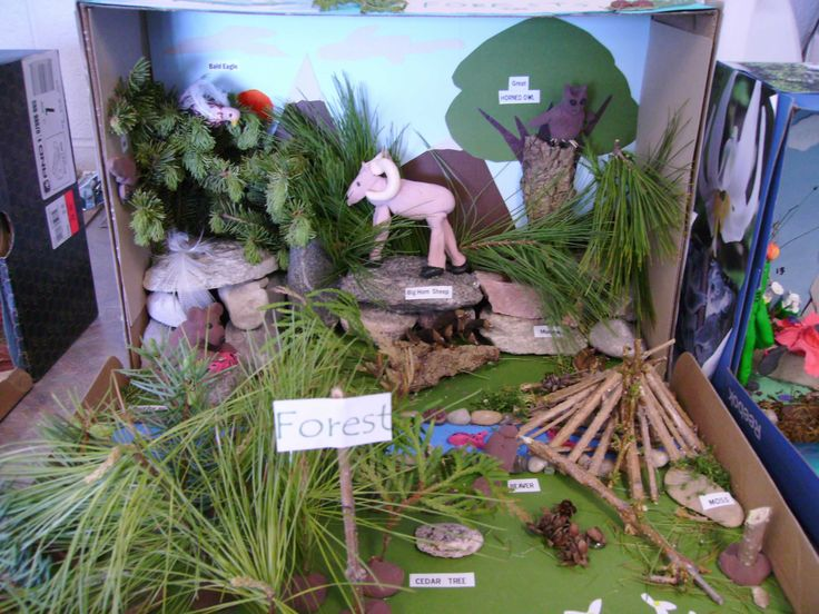 Kitchen Diorama Made Of Cereal Box: 14 Best Images About African Shoe Box Habitats On