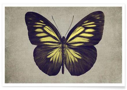 Papillon (yellow) - Eric Fan - Premium poster