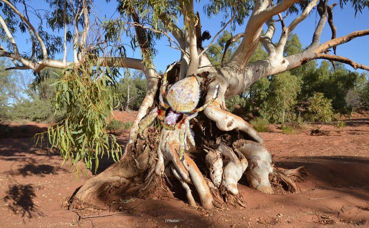 Photo edit-Spider Inserted in Old Man River Gum Tree - InfoBarrel Images