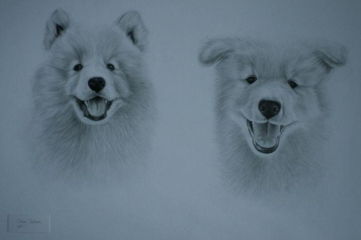 Samojeed honden door Odette