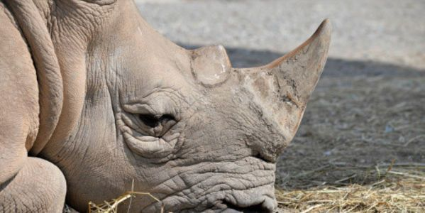 South Africa: Don't Legalize Rhino Poaching! http://www.thepetitionsite.com/390/997/608/south-africa-dont-legalize-rhino-poaching/#bbtw=631059606  Poaching is stealing.  Stealing is illegal.