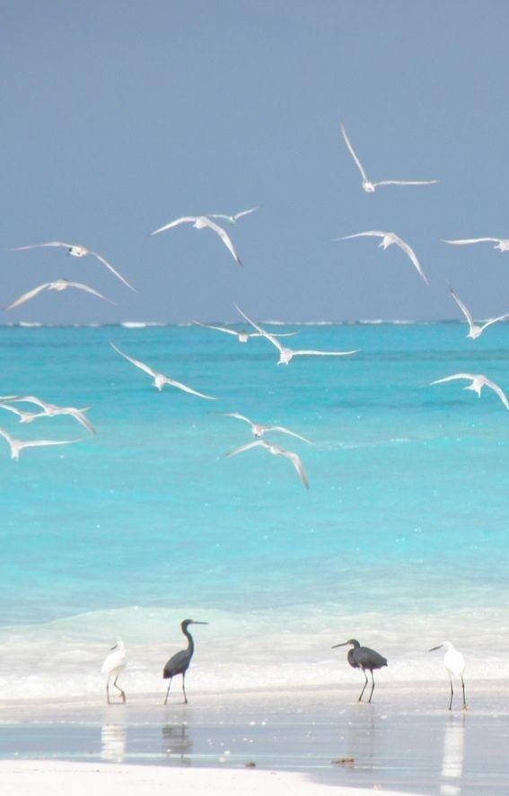 Seagulls on the #beach