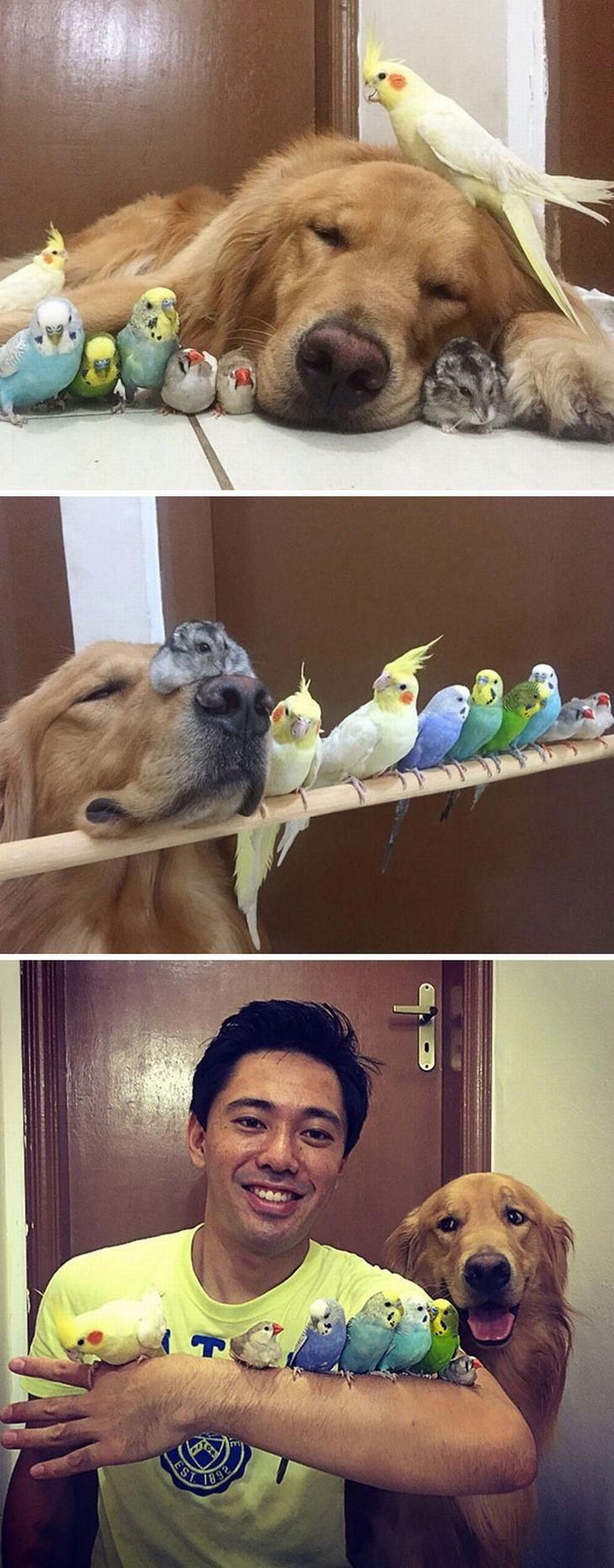 muchas mascotas