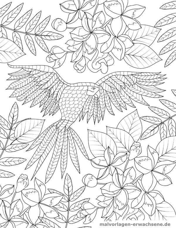 Malvorlage Papagei für Erwachsene   Malvorlagen / Ausmalbilder für