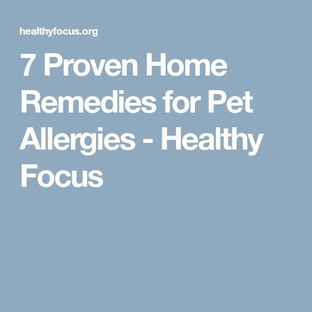 7 Proven Home Remedies for Pet Allergies - Healthy Focus