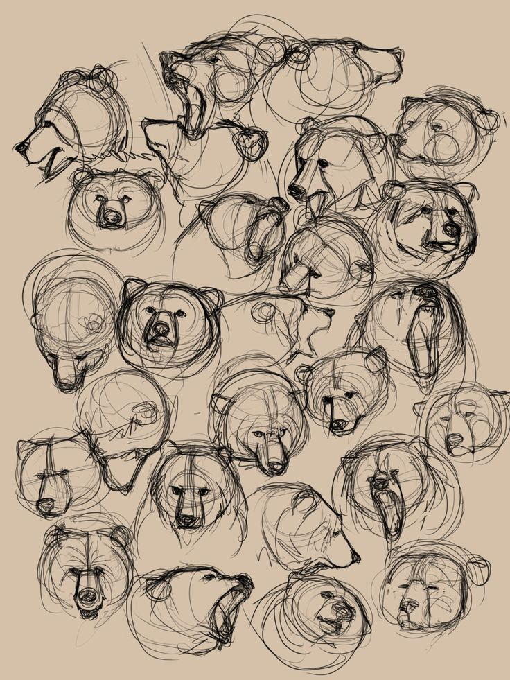 Bear sketches