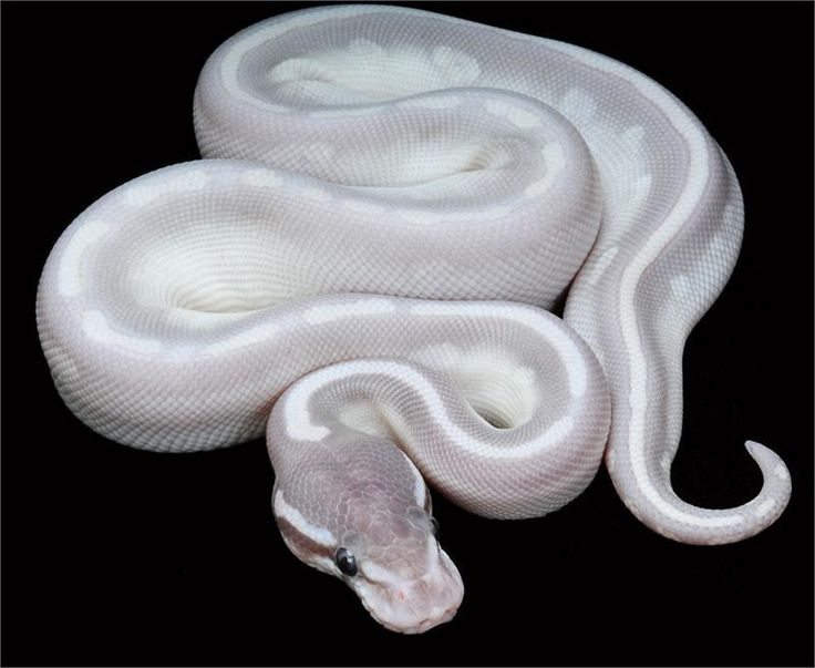 Pin On Cold Blooded Beauty Snakes