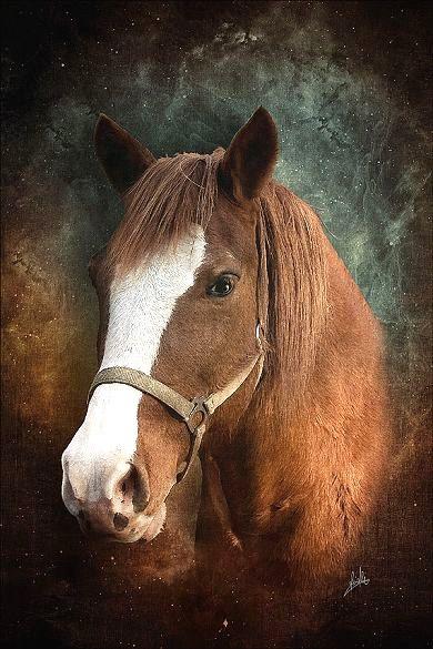 Bela Pintura de cavalo marrom