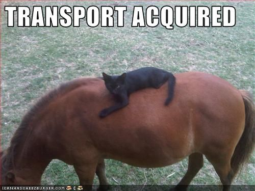 Really+Funny+Pictures+of+Horses | really funny pictures: funny pictures of horses