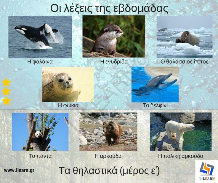 Mammals (part 5). Θηλαστικά (μέρος ε'). #λέξεις #Ελληνικά #ελληνική #γλώσσα #λεξιλόγιο #Greek #words #Greek #language #vocabulary #LLEARN