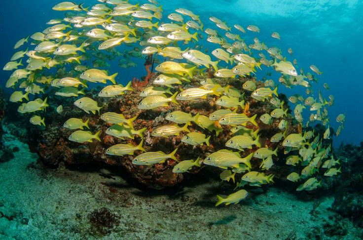5 reasons to pay attention to those dismal coral bleaching headlines.   Bleached corals are akin to dead canaries in a coal mine — a warning of what's to come if we don't address the threat of climate change.