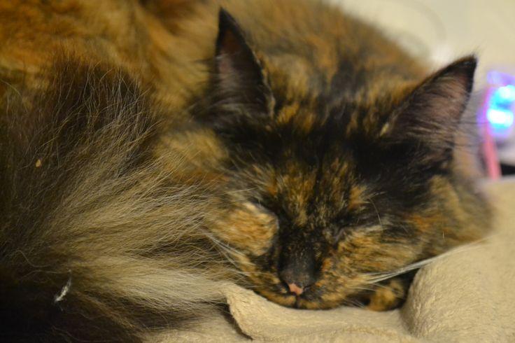 Sleeping Truffles