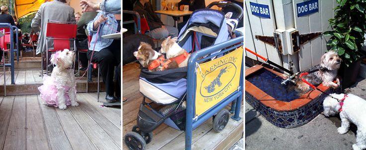 Barking Dog Restaurant Upper East Side