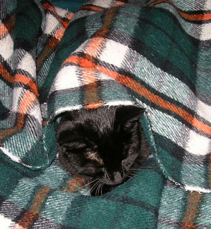 Lanera ama dormire coperta col suo panno