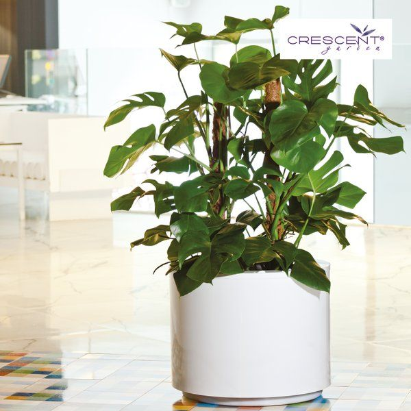 These brand new planters in the Crescent Family are made from steel. From the classic matte finish to powder coated in great fashion colors, these are constructed to last. Made in Spain.