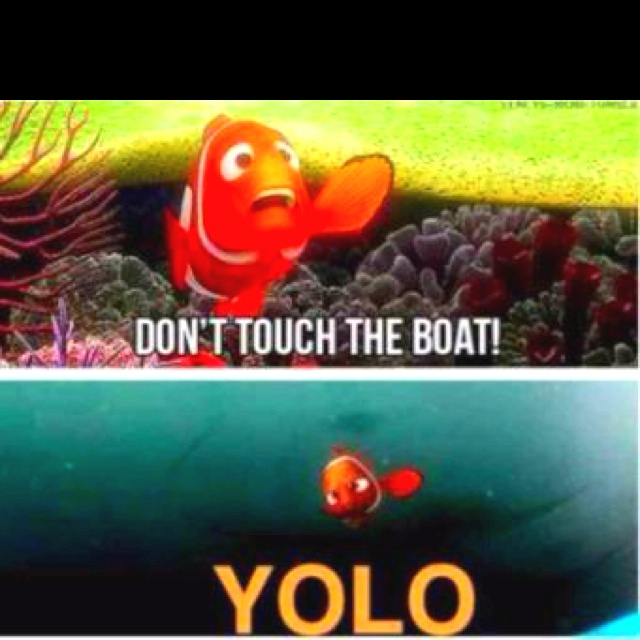 : Yolo, Laughing, Quotes, Findingnemo, Funny Stuff, Things, Disney, Finding Nemo, Mottos