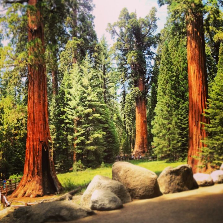 California Map Sequoia National Park%0A Sequoia National Park