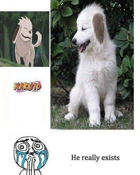 Akamaru actually exist in real life..See the proof